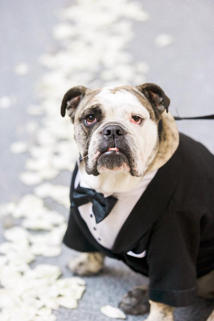 joule-dallas-wedding-photographer-shannon-skloss-85